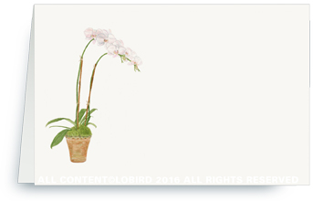 white orchid placecard